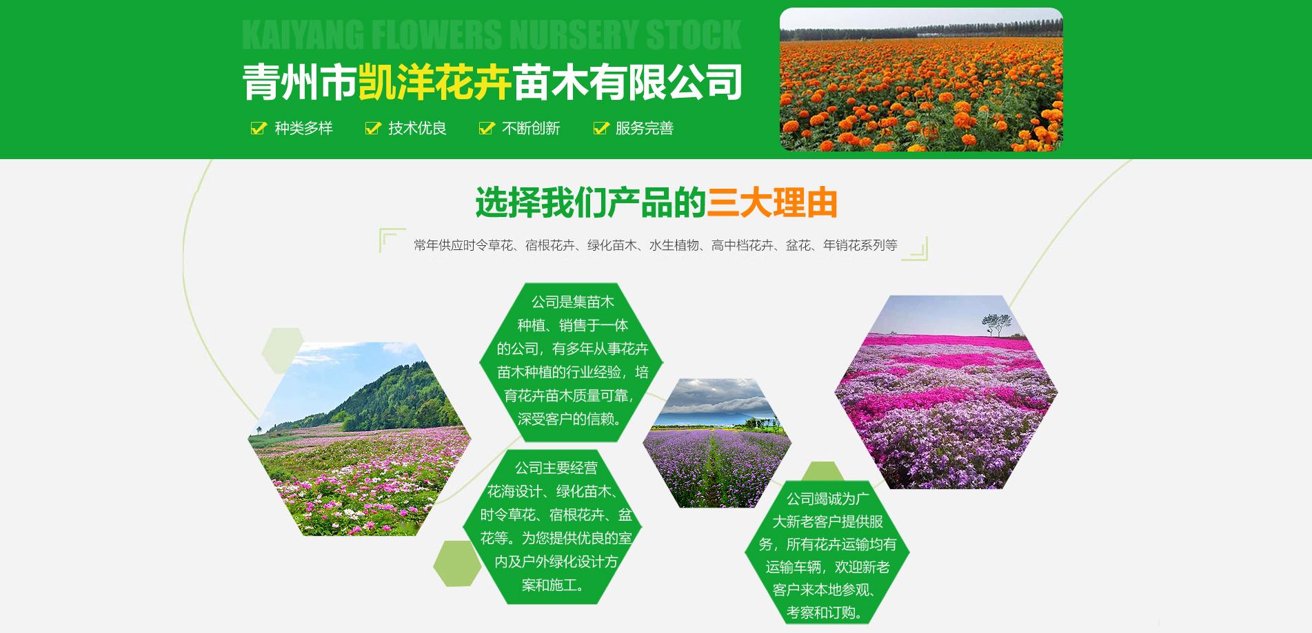 青州市凯洋花卉苗木有限公司